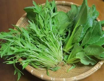 京菜収穫物