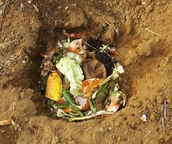 生ゴミ廃棄