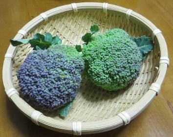 ブロッコリー二番果収穫物
