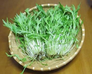京菜収穫物3月