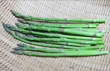 アスパラ収穫物