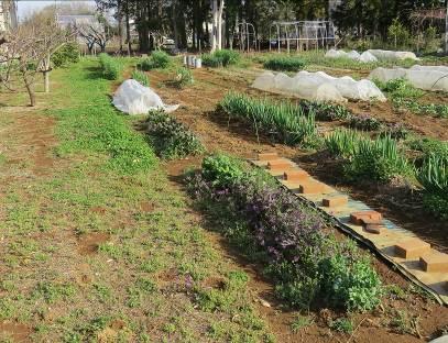 菜園風景4月