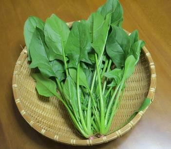 ホウレンソウ収穫物