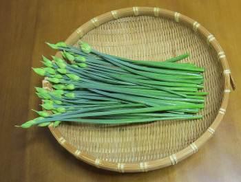 テンダーポール収穫物