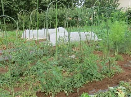トマト支柱