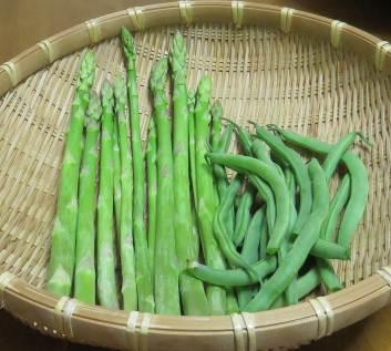 アスパラとインゲン収穫物