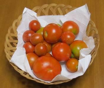 トマト収穫物
