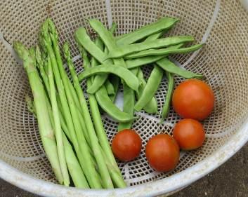 モロッコ収穫物