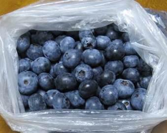 ブルーベリー収穫物7月