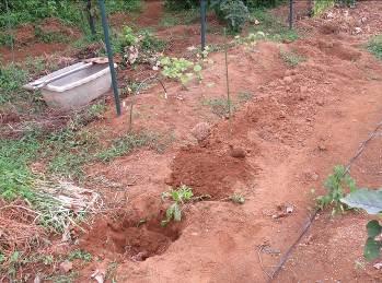 生ゴミ埋め込み中の列と穴