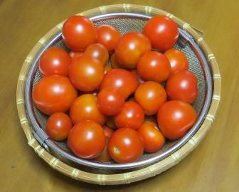 完熟トマト8月