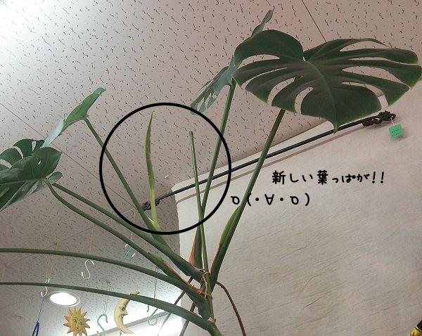 20140714 (1)
