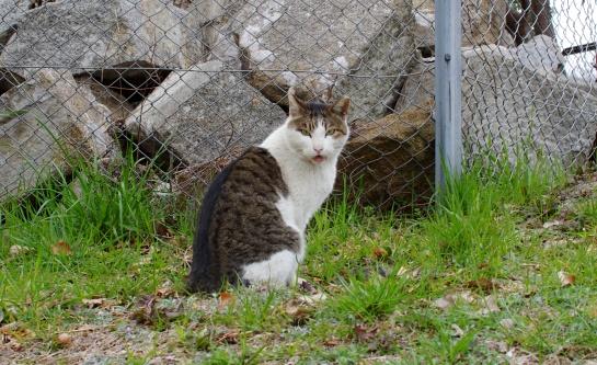 外猫t70d900sf90s0dfsdfdfddd