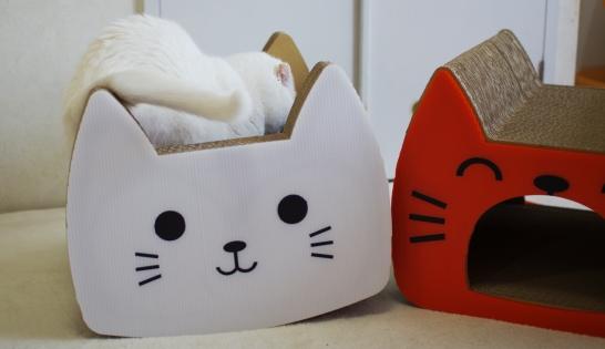 tama さんいきなり白猫さんの方へddd