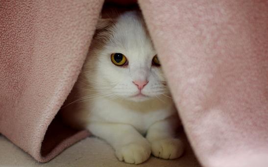 こっそり隠れて覗くのが大好きなーd-df0vvvvv