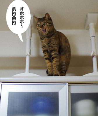食器棚の上でーs-fffffffコピー