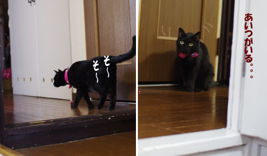 猫部屋にも何度も何度も何度もー3^-3-3t--tyt-t-t設定 1のコピー