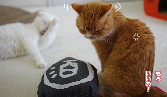 ぷぷ凄く怒って猫部屋へ4-r0-r-rのコピー