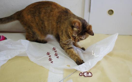 キララよぶ¥^-r-^えrwrうぇrうぇrうぇのコピー
