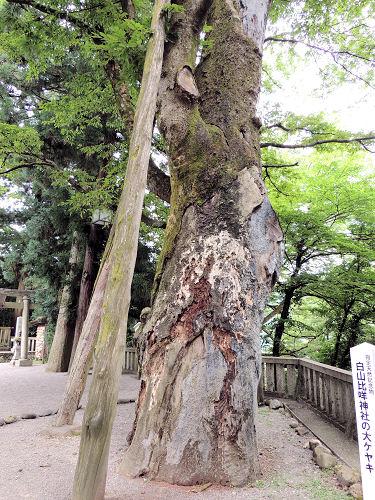 140805shirayama47.jpg