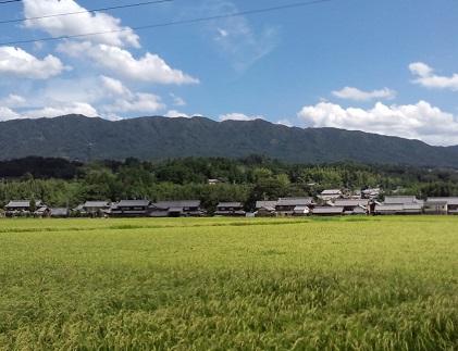 田舎の徒歩生活2014年8月
