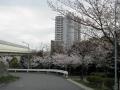 苔谷公園2