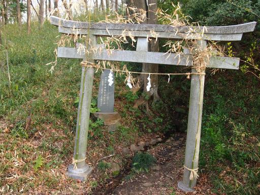 20140329・多磨植物2-17