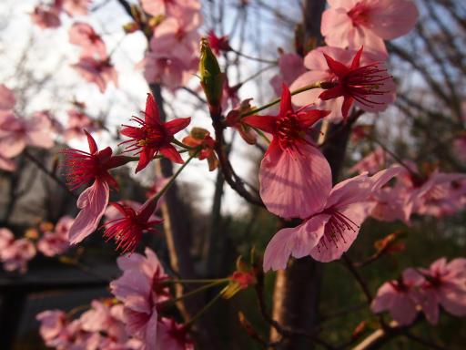 20140329・多磨植物3-02