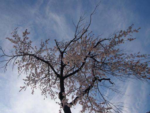 20140329・多磨植物空07