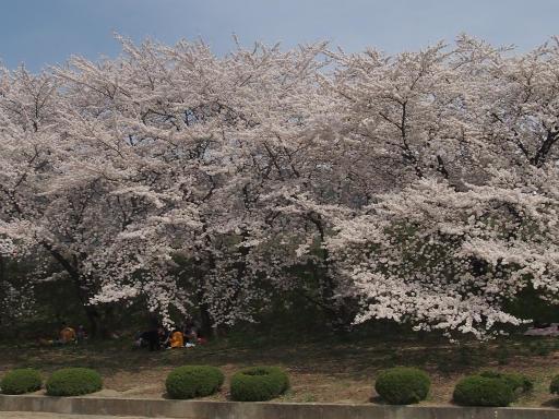 20140420・長野01-16・臥竜