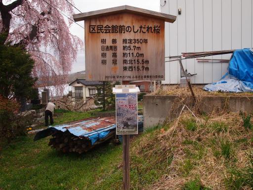 20140421・長野06-17・区民館前の桜