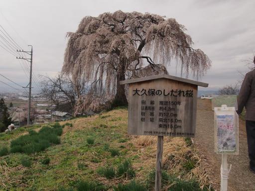 20140421・長野06-22・大久保のしだれ桜