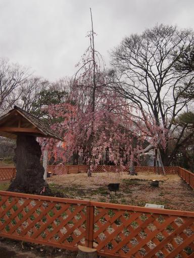 20140421・長野10-13