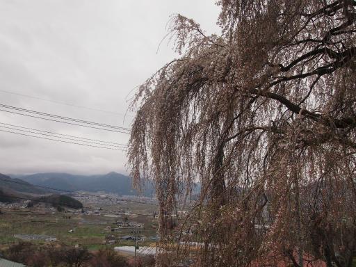 20140421・長野11-08・大久保のしだれ