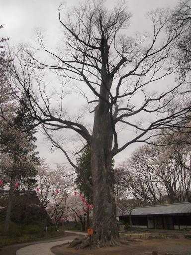 20140421・長野19-19・懐古園