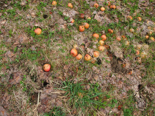 20140421・長野15-04・リンゴ