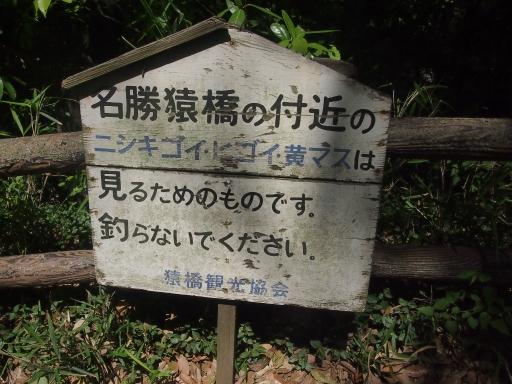 20140518・大月紀行ネオン04