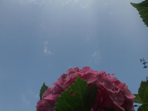 20140721・空04・アジサイ