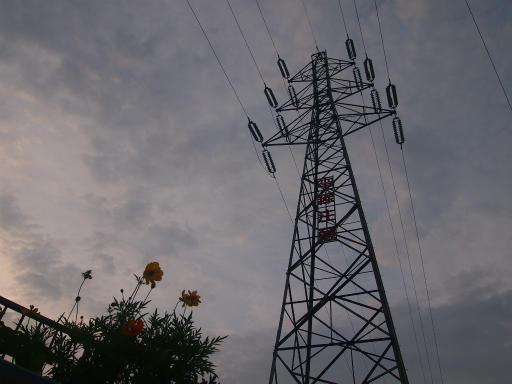 20140814・夏の朝08・キバナコスモスと鉄塔