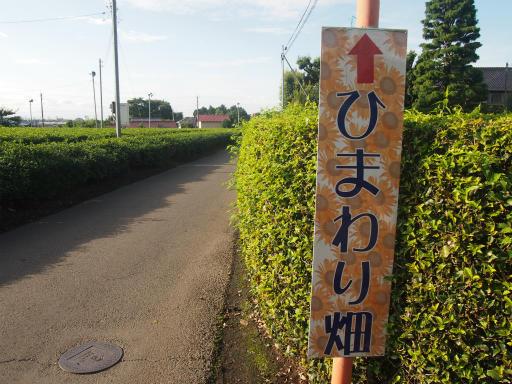 20140830・トトロ3-21
