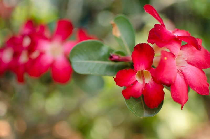 庭の花 3月