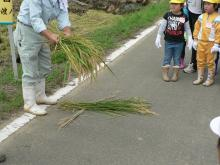 稲刈14-3
