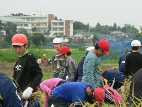 稲刈14-11