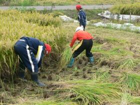 稲刈14-12