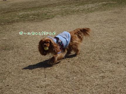 嵐丸 2014.3.18-3