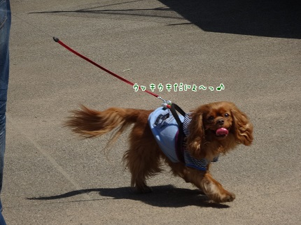 嵐丸 2014.3.18-1
