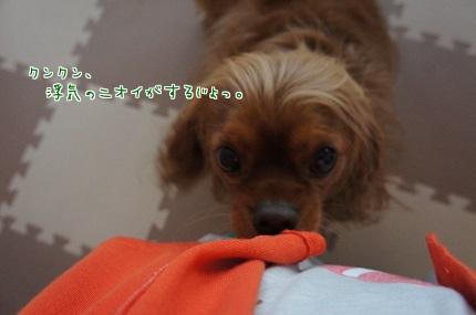 嵐丸 2014.4.24-16