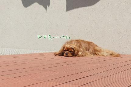 嵐丸 2014.4.26-1