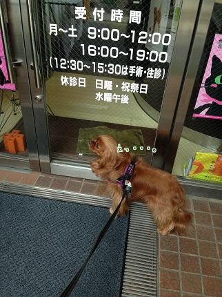 嵐丸 2014.4.28-2
