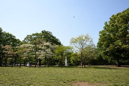 嵐丸 2014.4.29-3